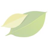 Blattsalat (Salanova grün)