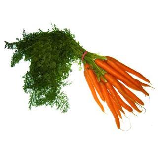 Karotten Bund   NEUE ERNTE