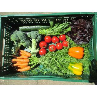 Gemüsekiste  mittel